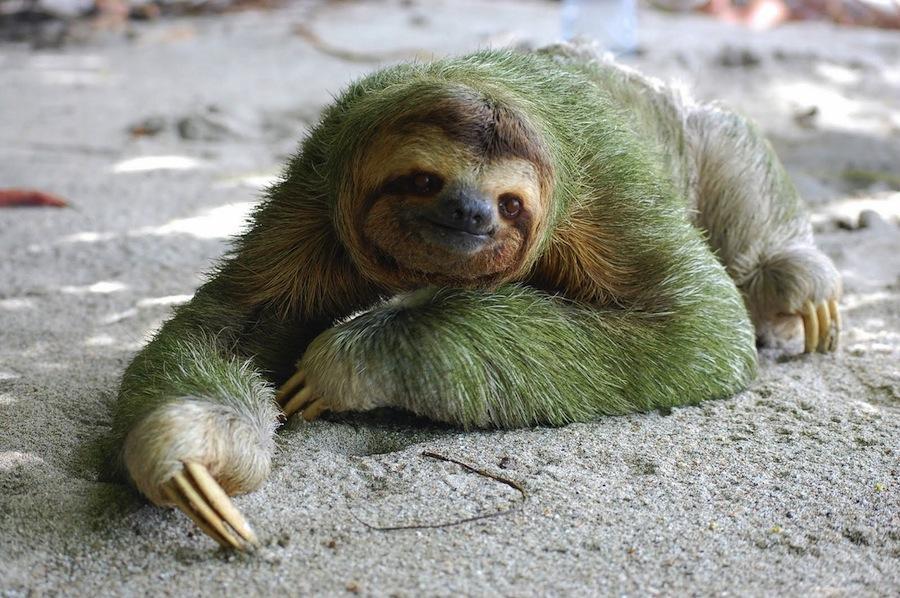 Жизнь зверьков ленивец