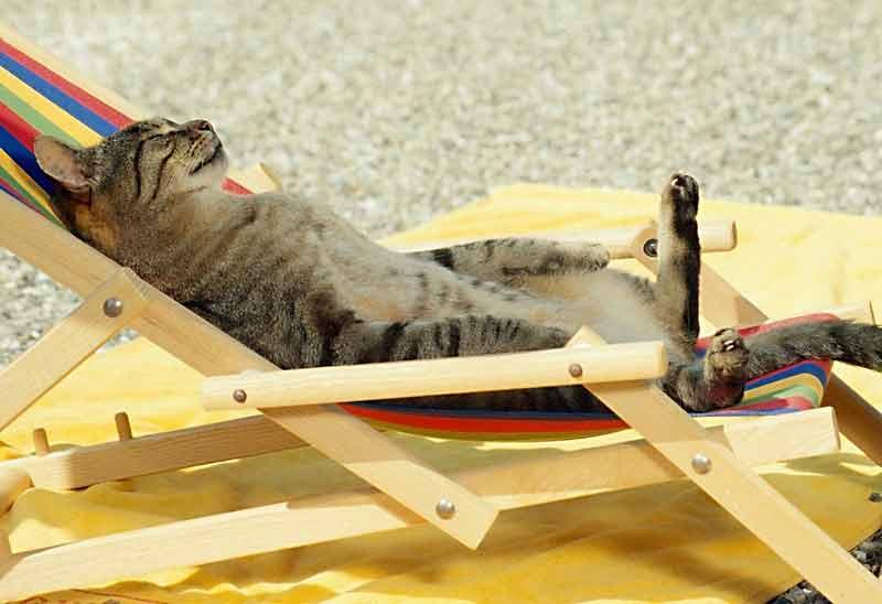тепловой удар кошки