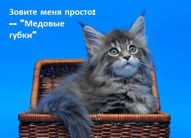 Что любят кошки секреты