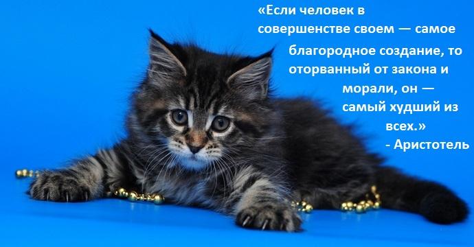 Секреты кошек