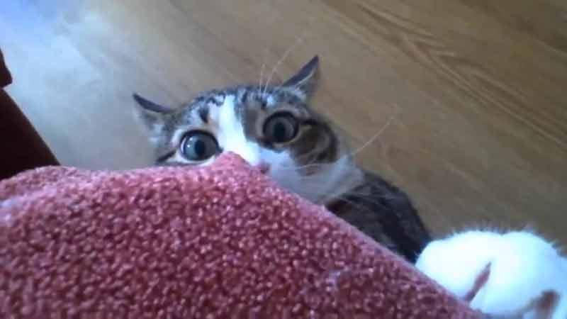 Поведение кошек