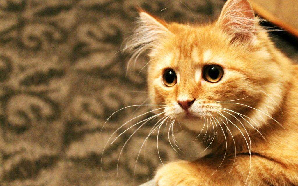 коты и кошки им подарили надежду