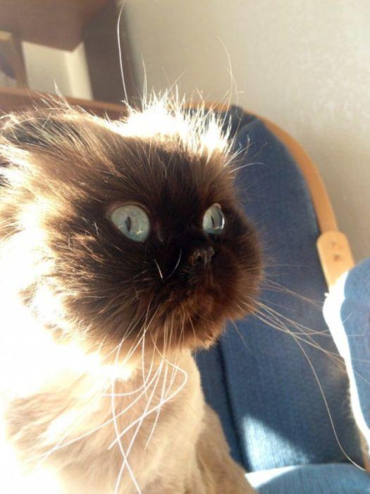 коты и кошки дарящие надежду