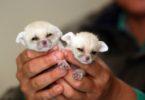 экзотические животные для дома