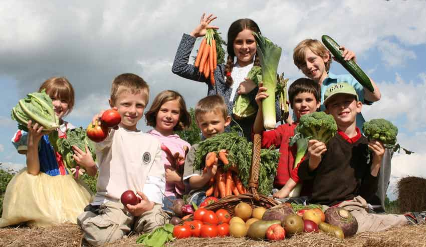Продукты вегетарианства