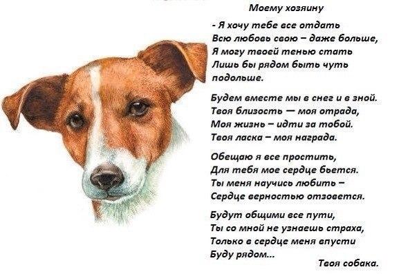 Собаки цитата