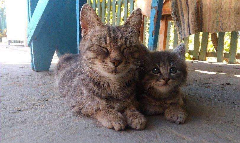 Котики, с которыми не соскучишься