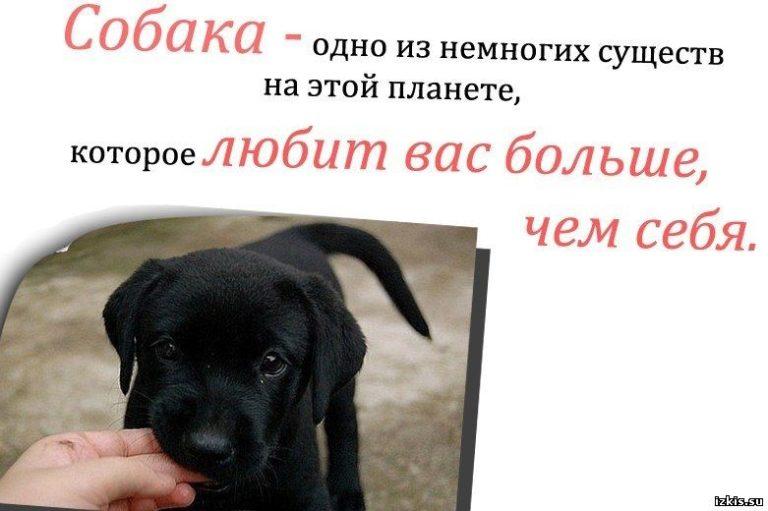 Высказывания про собак картинка