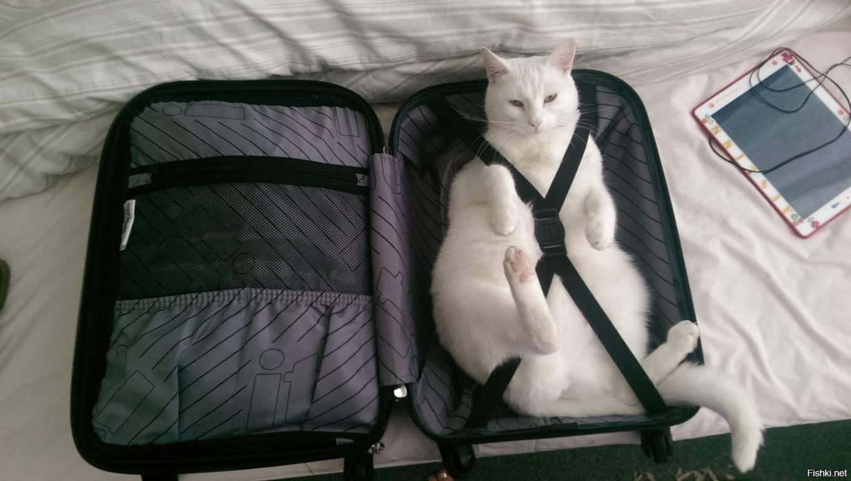 Кот собирается в отпуск