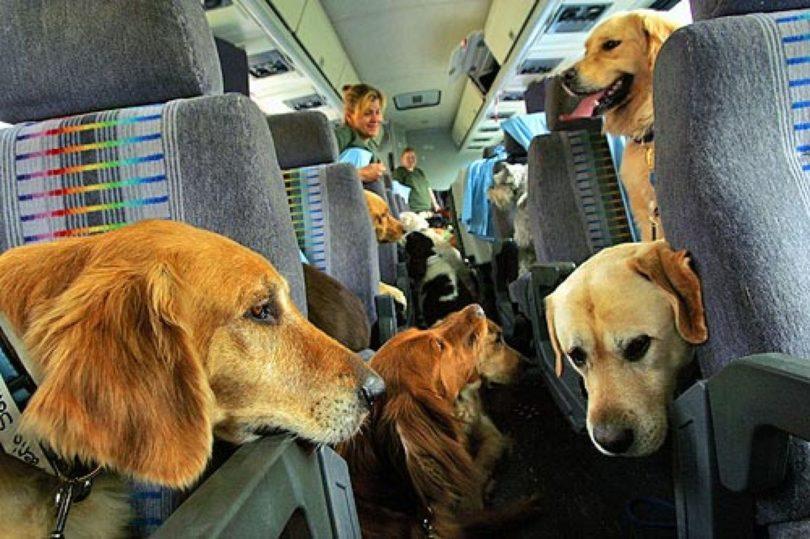 Брать животных в отпуск?