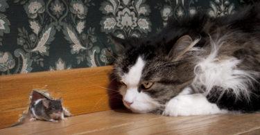 как убрать кошачьи метки