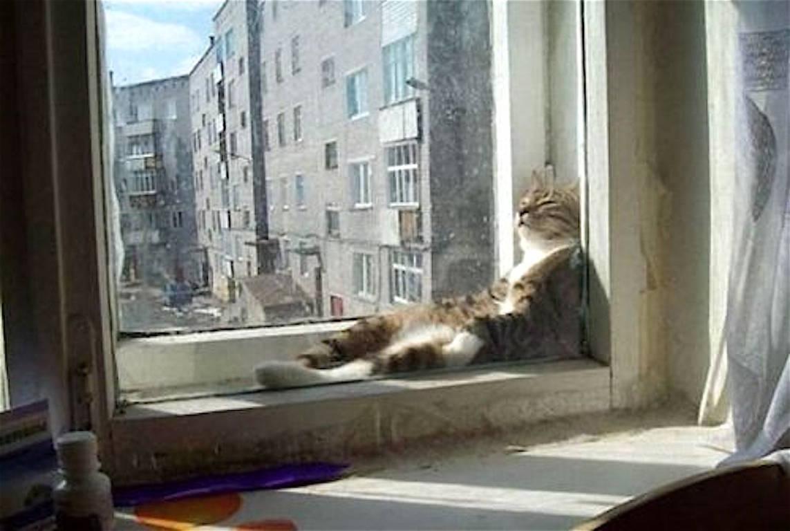 Рассказ кота