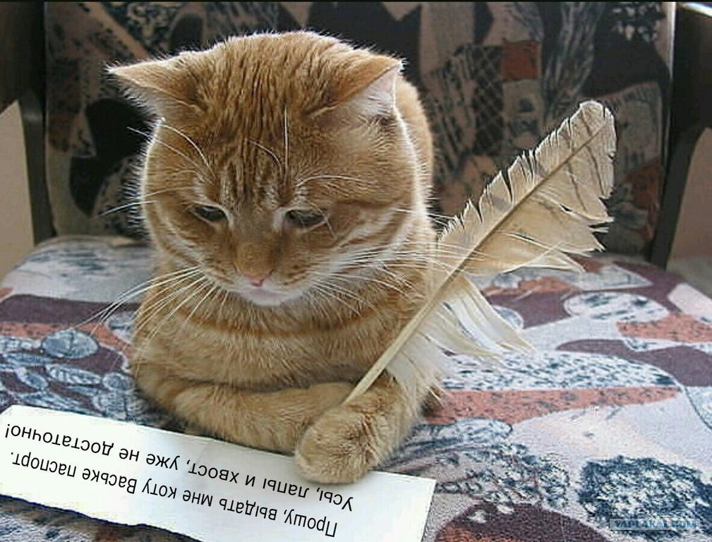 Рассказ кота: большой мир ждал меня