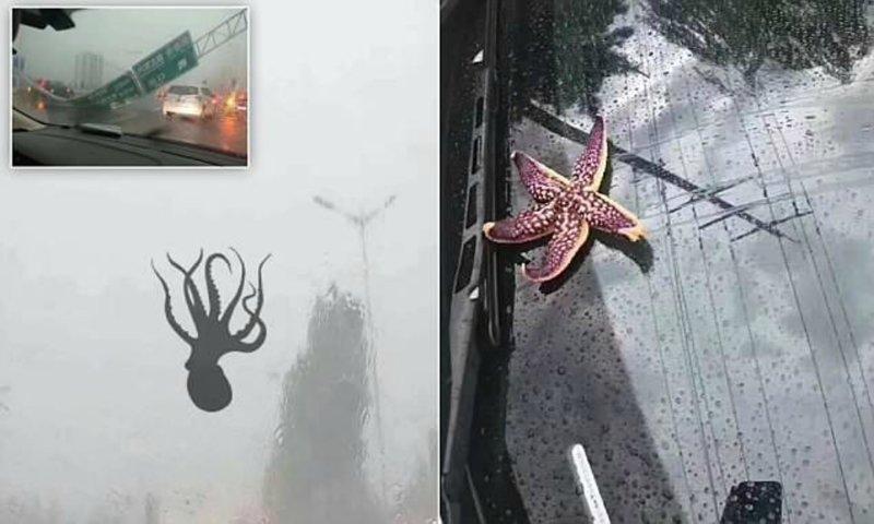 В Китае прошел дождь из морепродуктов