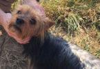Собака нашла пропавшего ребенка