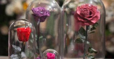 Роза в колбе: как отличить подделку от оригинала