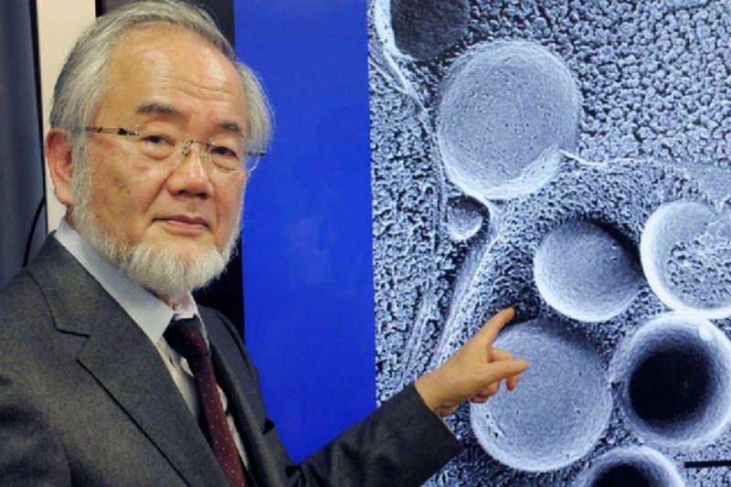 Однодневный голод: секрет, за который дали Нобелевскую премию