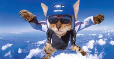 Кот парашютист уносится в небо