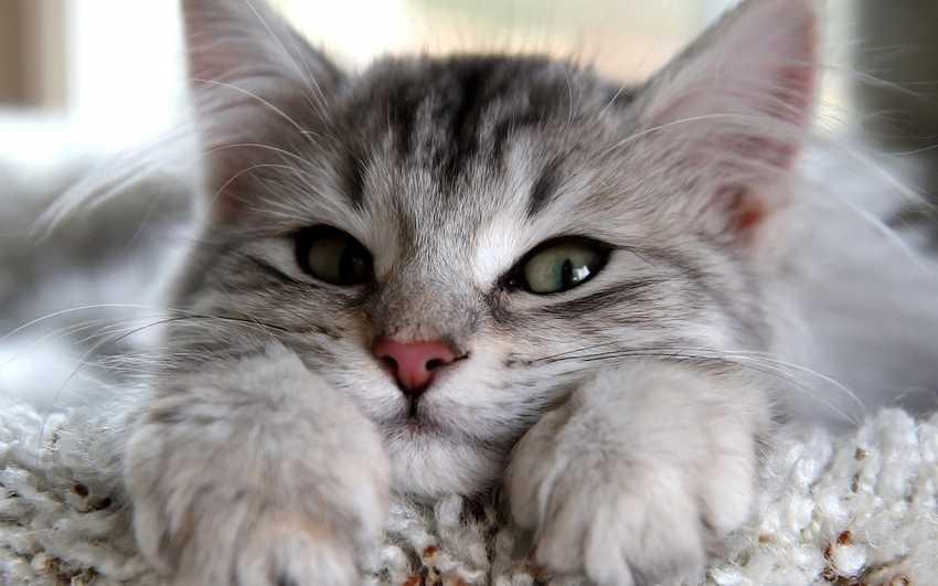Байки от Кота — как кот Том в борще рыбачил