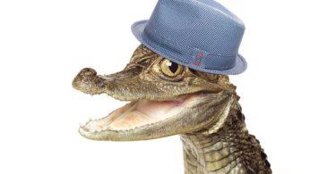 Крокодил в бассейне