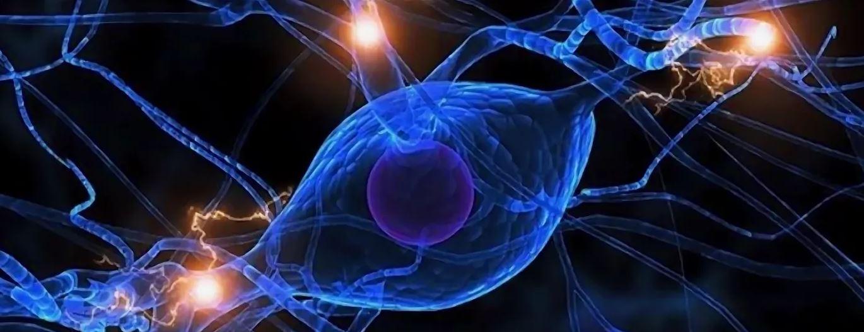 Регенеративная медицина путь к бессмертию
