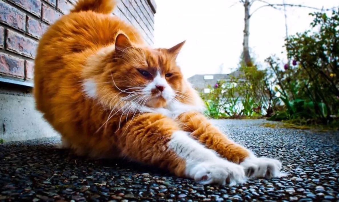 История о коте