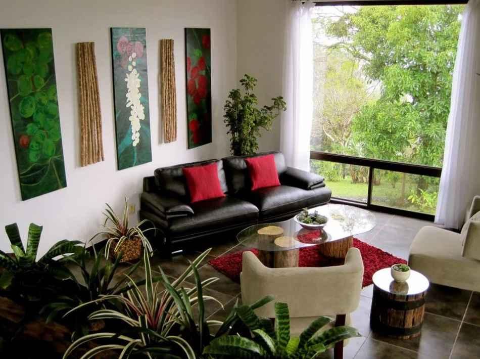 фикус очищает воздух в квартире