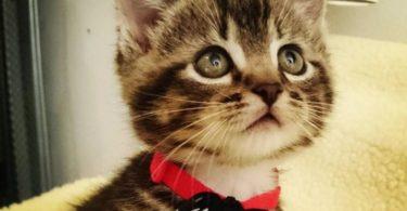 Домашние обязанности кошек