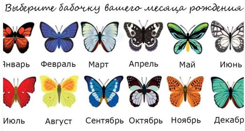 Тест: выбери бабочку и узнай о себе чуть больше